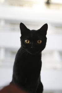 6-loves-cats