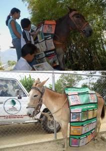 5-mule
